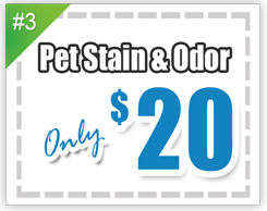 Pet stain and odor removal $10 per room